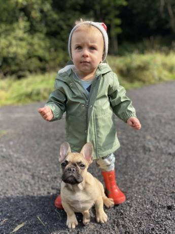 french-bulldog-puppies-big-3